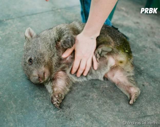 Douglas en train d'apprécier sa séance caresses sur le ventre