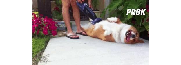 dog happy 1
