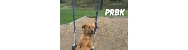 dog happy 3 balançoire