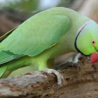 [PHOTOS] Birdie la perruche blessée : son rétablissement en 6 photos