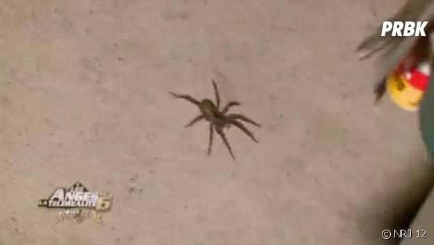 Les Anges 6 : une grosse araignée s'invite au campement