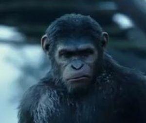 La Planète des singes - l'affrontement : découvrez la bande-annonce