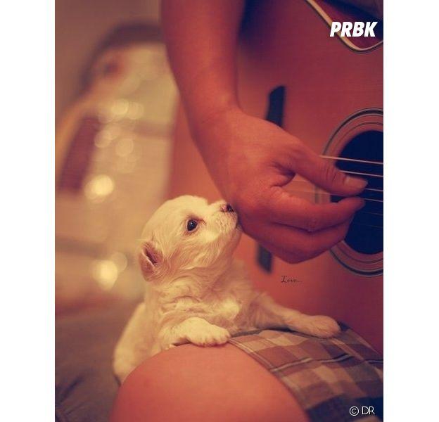 Playlist PureBreak #51