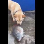[CUTE] Un chien tente de sauver des poissons... fraîchement pêchés