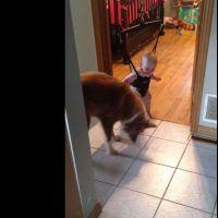 Un chien s'improvise professeur de saut pour bébé