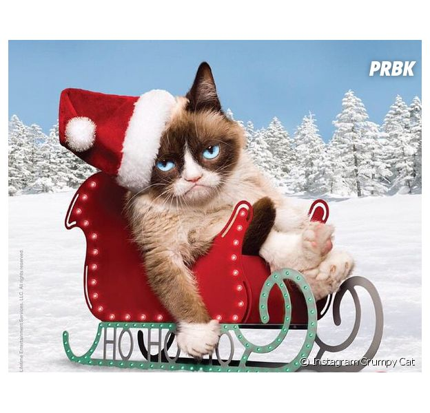 Grumpy Cat : le chat qui valait 100 millions d'euros