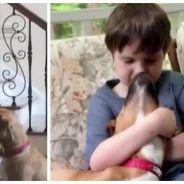 Ils recueillent un pitbull abandonné et maltraité, la vie de leur enfant autiste en est bouleversée