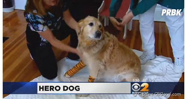 Une photo de Figo après l'opération du vétérinaire.