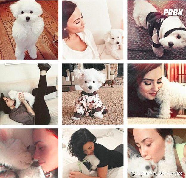 Demi Lovato en deuil de son chien Buddy