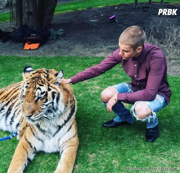 Justin Bieber pose avec un tigre sur Instagram, PETA s'insurge.