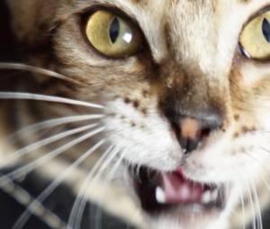Lua, le chaton de Squeezie ne fait que des bêtises