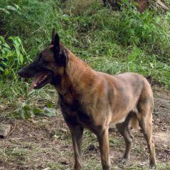 The Walking Dead saison 9 : une pétition pour sauver le chien de Daryl