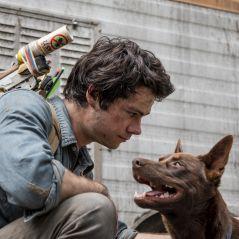 Love and Monsters : combien de chiens ont joué Boy ?
