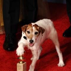 Steven Spielberg : ses bons tuyaux pour son prochain film ? Uggie et Milou ! (VIDEO)