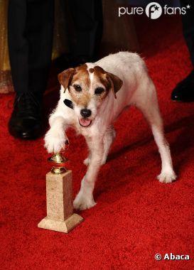 Uggie prend la pose avec le Golden Globe reçu pour The Artist