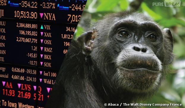 Les chimpanzés plus forts en bourse que les Hommes ?