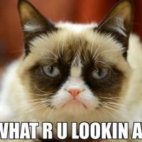 Grumpy Cat mascotte de Friskies : après le cinéma, la pub !