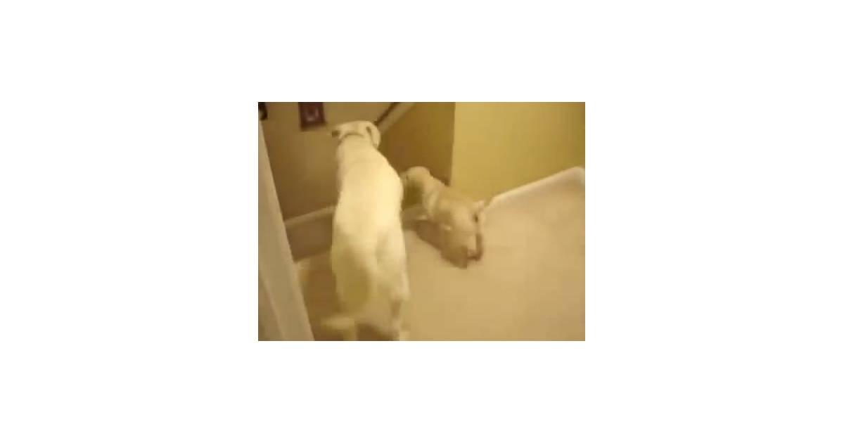 Cute quelle diff rence entre un chat et un chien la - Difference entre catalyse et pyrolyse ...