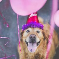 [PHOTOS] L'hommage émouvant d'une photographe pour son labrador Chuppy