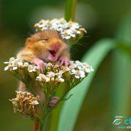[CUTE] Souriez : voici les 25 animaux les plus heureux du monde !
