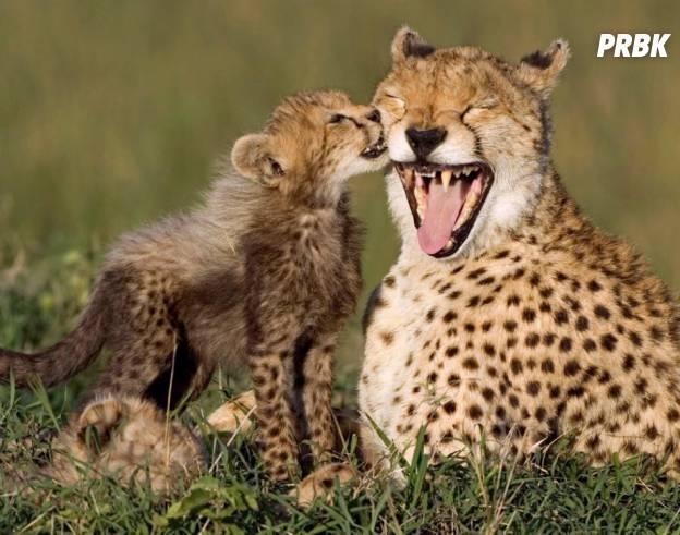 animal heureux 05