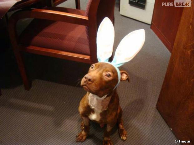 patrick avec oreilles de lapin