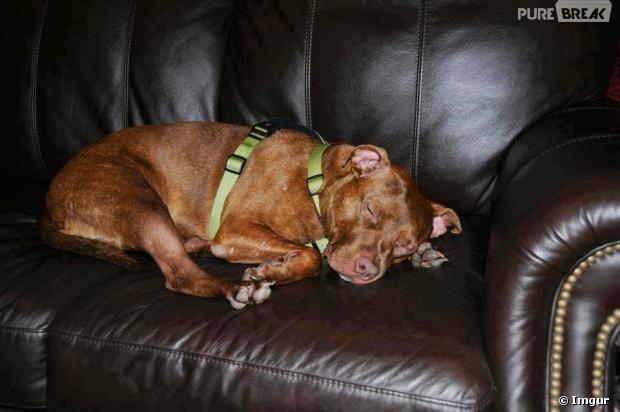 Patrick sieste sur le canapé