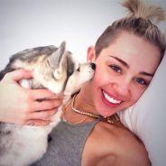 Miley Cyrus fond en larmes en concert... à cause de son chien