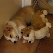 [CUTE] 30 animaux en pleine sieste avec leur peluche