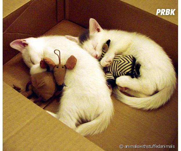 chats dans une boite