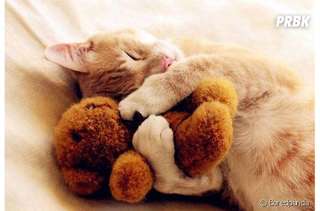 chat ours