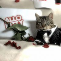 [VIDÉO] Allo Kitty : la livraison de chat pour faire craquer les filles !