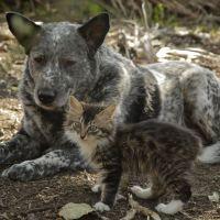 [VIDÉO] L'amitié très spéciale entre ces chien et chat va vous faire fondre