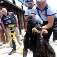 [VIDEO] Une chienne sauve la vie de ses petits avec l'aide des pompiers