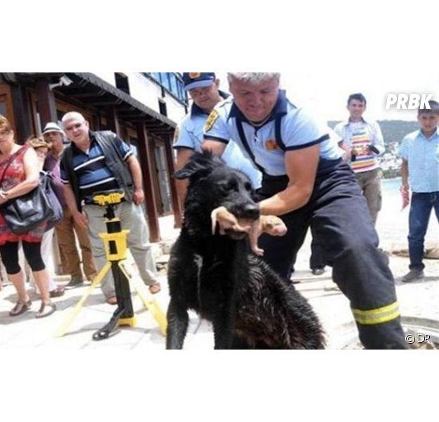 Une chienne sauve ses petits de la noyade avec l'aide d'une équipe de pompiers en Turquie