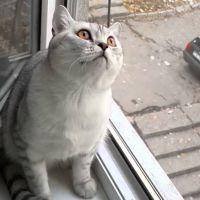 Avez-vous déjà vu un chat bloqué et imperturbable ? Celui-ci vaut le détour !
