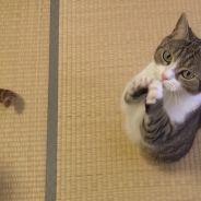 Trop mignon : voici Taro, le chat le plus poli du monde !
