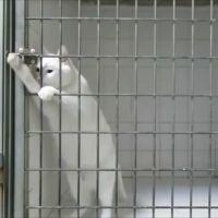 Ce chat est en mode Prison Break : il déverrouille sa cage tout seul !