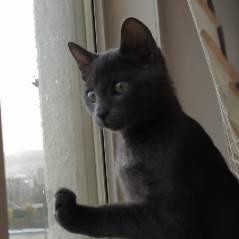 Trop cute : la réaction de ce petit chaton qui découvre la neige pour la première fois