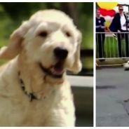 Un chien court un marathon par erreur... et récolte des milliers de dollars contre le cancer !