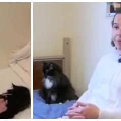 Cute : aux USA, des prisonniers s'occupent de chats abandonnés pour se réinsérer