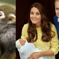 Royal Baby : un zoo crée la polémique après la naissance de la Princesse Charlotte