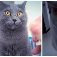 WTF : ce chat devient TRÈS bizarre quand on froisse du plastique devant lui !