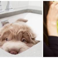 Trop mignon : voici Tonkey, l'adorable chien joufflu qui fait fondre Instagram