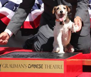 The Artist : Uggie honoré sur le Walk of Fame