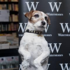 The Artist : mort d'Uggie, l'adorable chien du film