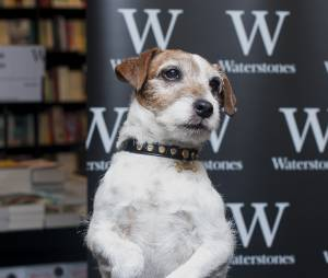 The Artist : Uggie, le chien du film, est mort