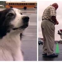 Champion du monde ! Ce chien a battu un record de 100m canin... bien WTF