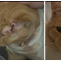 Un chat arrête une balle perdue et sauve la vie d'un petit garçon !