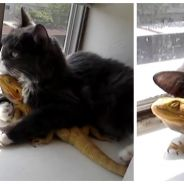 Trop cute : ce chat et ce lézard sont les meilleurs amis du monde